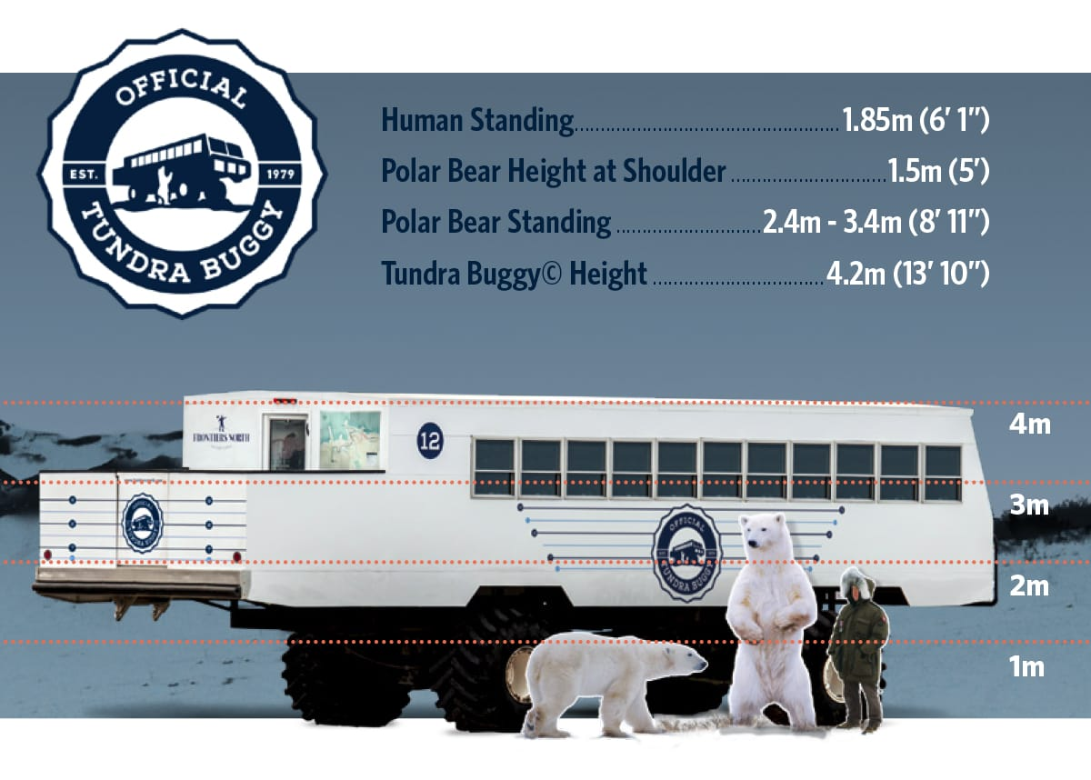 Diagram of size of Tundra Buggy compared to a polar bear and a human