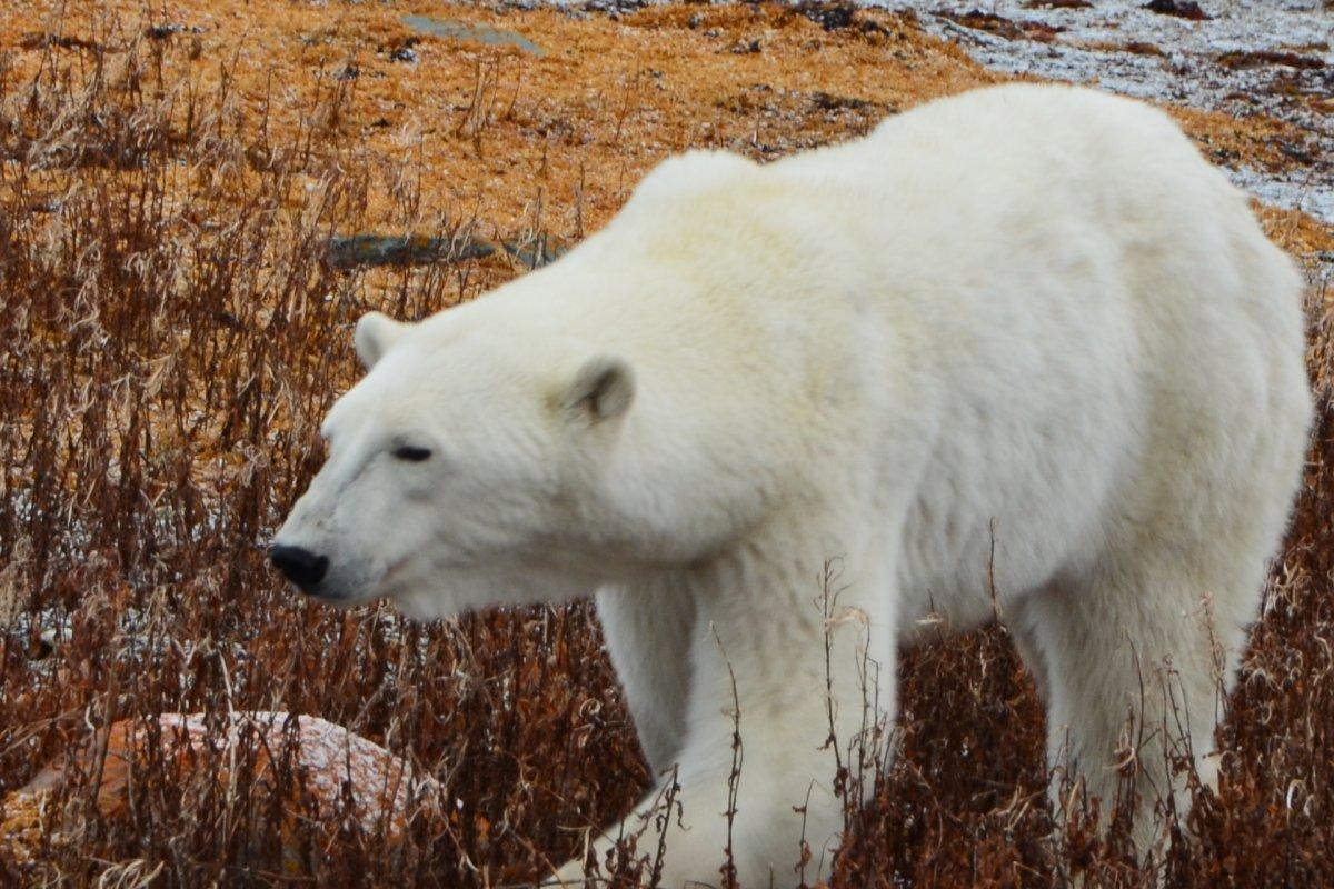 2017 Wildlife Count   Frontiers North Adventures