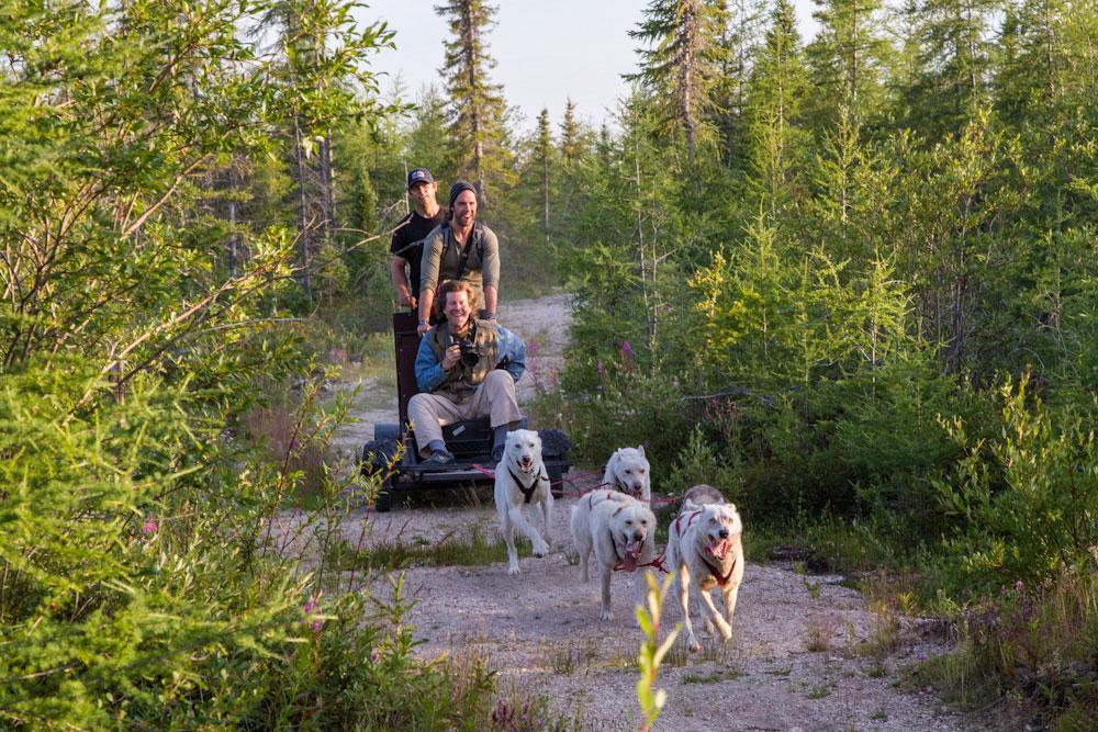 Dog Cart Excursion | Frontiers North Adventures