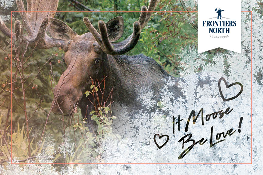 frontiers-north_it-moose-be-love.jpg