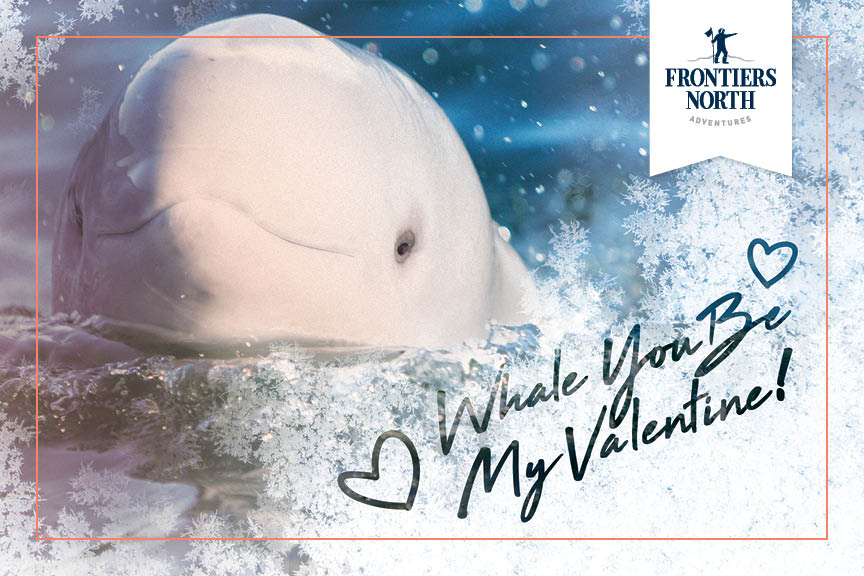 frontiers-north_whale-you-be-my-valentine.jpg